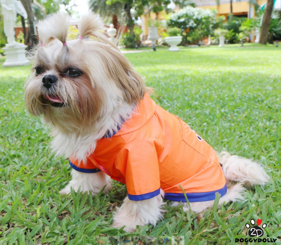 Doggy Dolly dežni plašč, 2 tački, oranžen