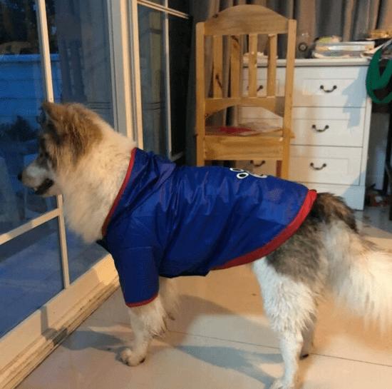 Doggy Dolly dežni plašček 2 tački, moder