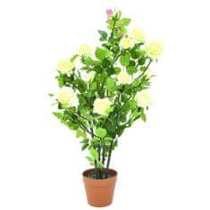 Europalms rose bush, Roza grm, smetana, 86 cm