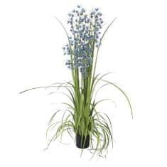 Europalms Trawa orchidea , Wysokość 140 cm / niebieskie kwiaty
