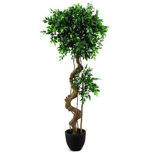 Europalms Fíkus bonsai , výška 170 cm