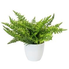 Europalms Ferns , Višina 33 cm / zelena