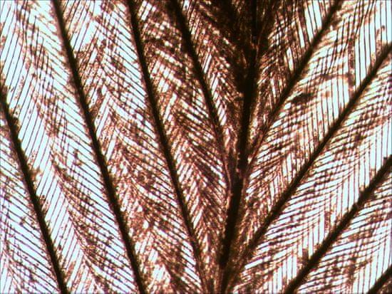 Levenhuk zestaw do obserwacji pod mikroskopem N10 NG