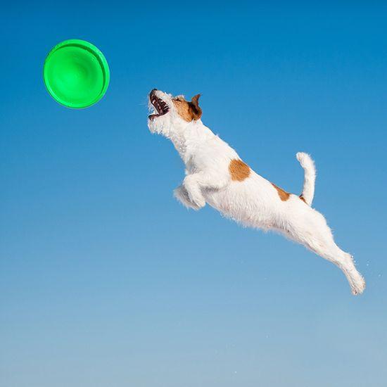Flyber dvostranski leteči disk za pse, 22 cm