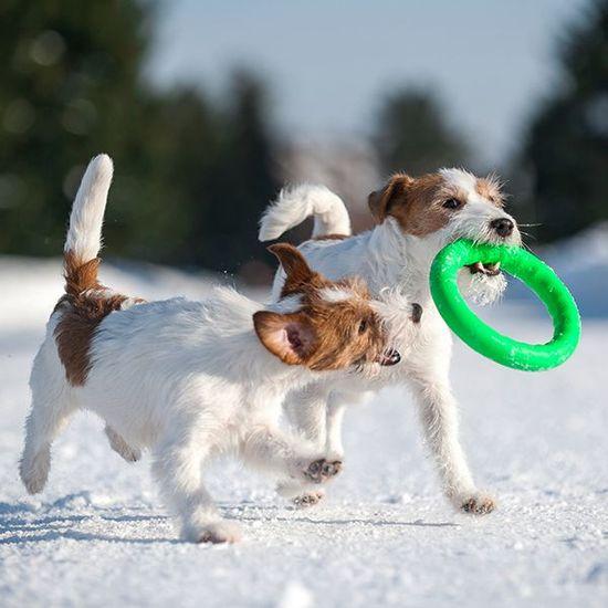Pitch Dog tréninkový KRUH pro psy zelený 20 cm