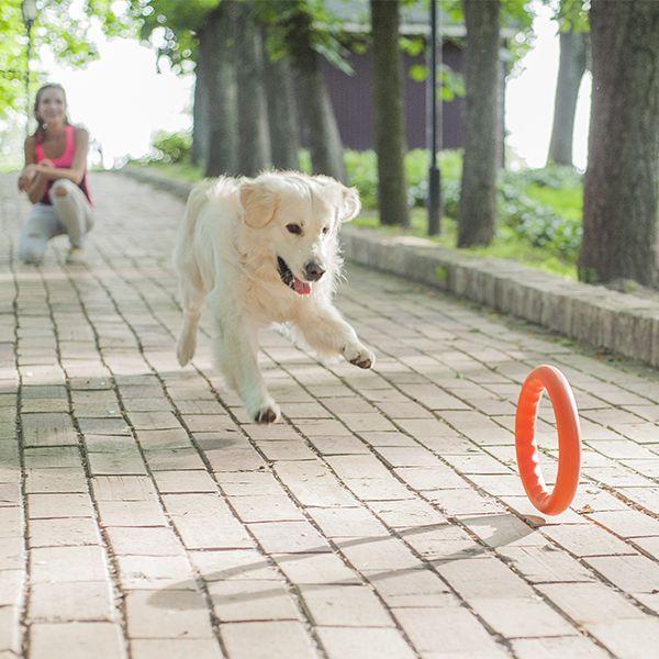 Pitch Dog tréninkový KRUH pro psy oranžový 20 cm