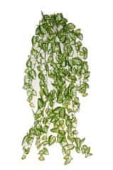 EverGreen Minilístková rostlina Syngonium, 70 cm