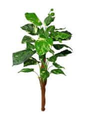 EverGreen Pothos 90 cm, kmen s kokosovým vláknem