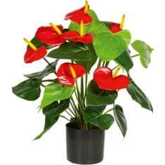 A La Maison Leafhopper (Anthurium) z czerwonymi kwiatami, 50 cm