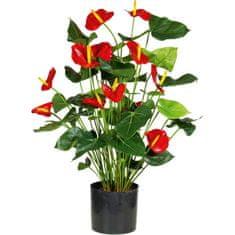 A La Maison Leafhopper (Anthurium) z rdečimi cvetovi, 80 cm