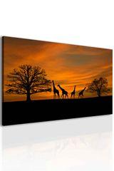 Obraz západ slunce na safari Velikost: 90x60 cm