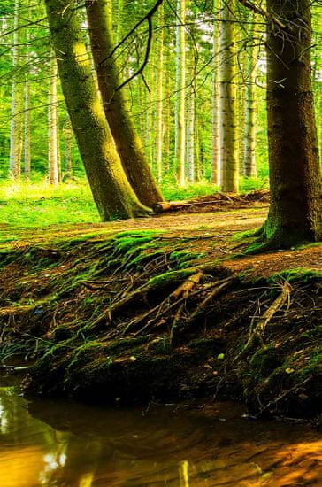 InSmile Obraz lesní zátiší Velikost: 100x45 cm