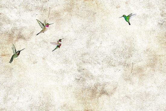Vavex Vliesová obrazová tapeta Kolibříci 85001, 368 x 280 cm, Photomurals, Vavex