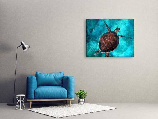 Dalenor Obraz Korytnačka v mori, 75x50 cm