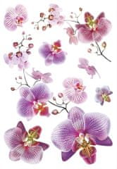 AG design SM3440 Samolepicí dekorace Orchidej, 42,5 x 65 cm