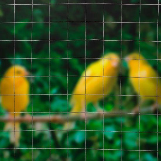 shumee Nature Siatka z drutu, kwadratowa, 1x2,5 m, 13 mm, galwanizowana stal