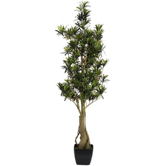 Europalms Nohovec stromček, 115 cm