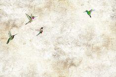 Vavex Vliesová obrazová tapeta 5001 Garden Kolibříci, 390 x 260cm, My Dream, Vavex