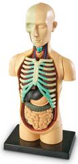 Learning Resources Anatomický model lidského těla