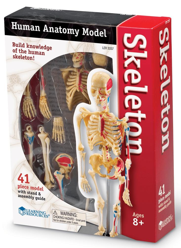 Learning Resources Anatomický model lidské kostry
