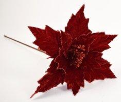 DUE ESSE cvet božične zvezde, rdeči, 60 cm