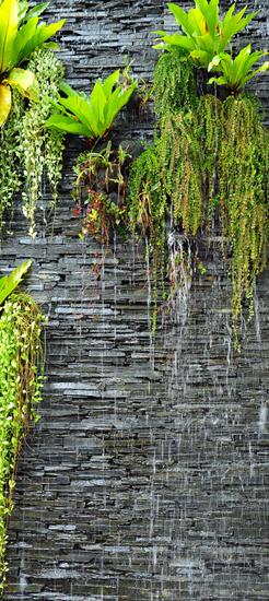 AG design fototapeta Biljke na stijenama, 90 x 202 cm