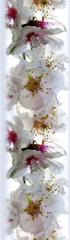 AG design Samolepiaca bordúra Nežné kvety jabloní 5 m x 14 cm
