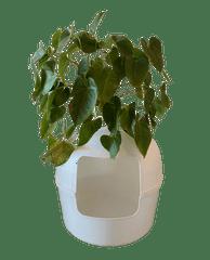RHR Quality Flower XXL plastični WC White