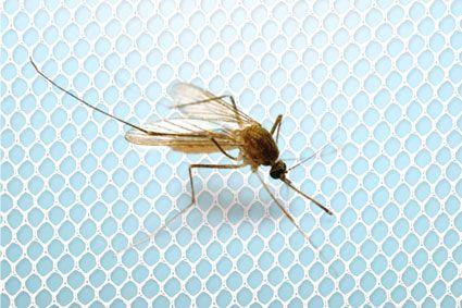 HomeLife Okenní síť proti hmyzu 130x150cm, bílá, samostatně