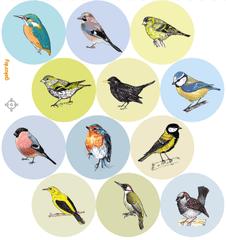 GEKONKY Veselé puntíky - naši ptáci
