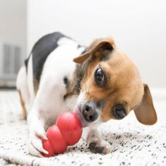 KONG Classic igračka za pse, XS, crvena