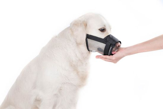 Dogextreme Nylon fang a kutyához hálóval