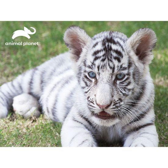 Animal Planet slagalica 3D - bijeli tigar, 63 komada, 31x23 cm