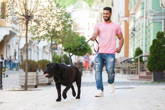Evolutor Nejsilnější vodítko pro psa EVOLUTOR černé