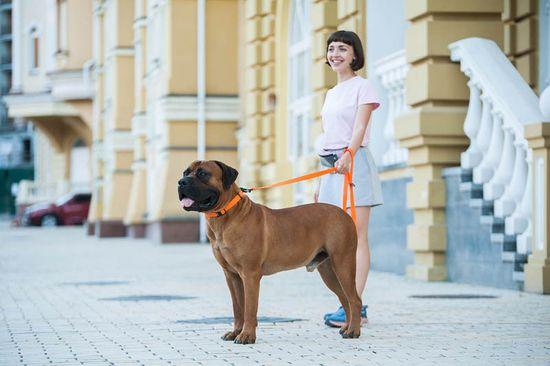 Evolutor Nejsilnější vodítko pro psa EVOLUTOR oranžové