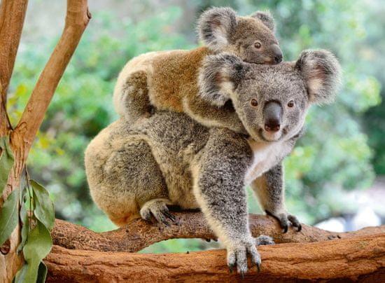 Ravensburger sestavljanka 129454 Družina Koala, 200 kosov