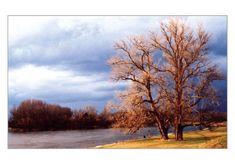 tvorme pohľadnica Strom