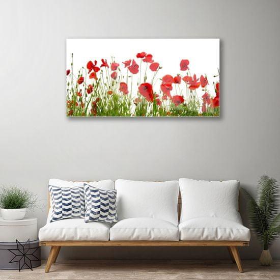 tulup.cz Obraz plexi Maky kvety príroda 120x60cm