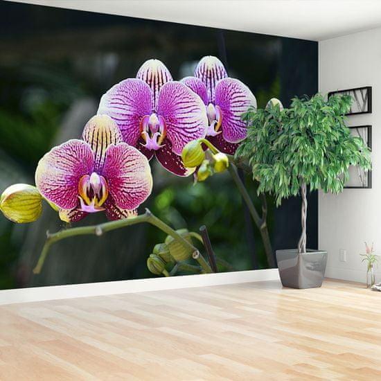 tulup.cz Fototapeta Vliesová Fialová orchidea 152x104 cm