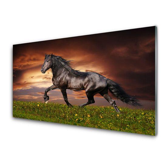 tulup.cz Obraz na akrylátovom skle Čierny kôň lúka zvieratá 120x60cm