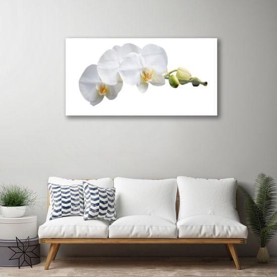 tulup.cz Obraz na akrylátovom skle Kvety rastlina príroda 120x60cm