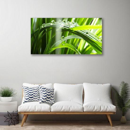 tulup.cz Obraz Canvas Tráva rosa kvapky rastlina 120x60cm