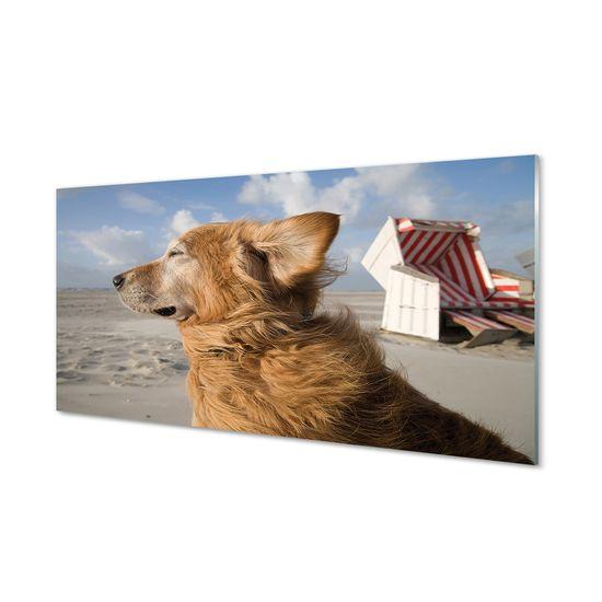 tulup.cz Nástenný panel Hnedý pes beach 120x60cm