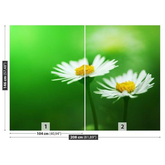tulup.cz Fototapeta Samolepící Biele sedmokrásky 208x146 cm