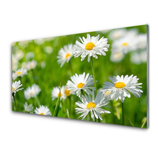 tulup.cz Skleneny obraz Sedmokráska kvet rastlina 120x60cm