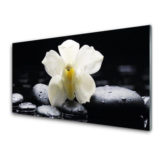 tulup.cz Skleneny obraz Kvet kamene rastlina 120x60cm