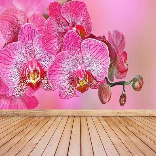 tulup.cz Fototapeta Vliesová Ružová orchidea 152x104 cm