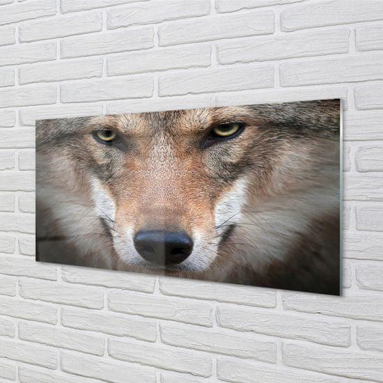 tulup.cz Obraz na akrylátovom skle Wolf eyes 100x50cm
