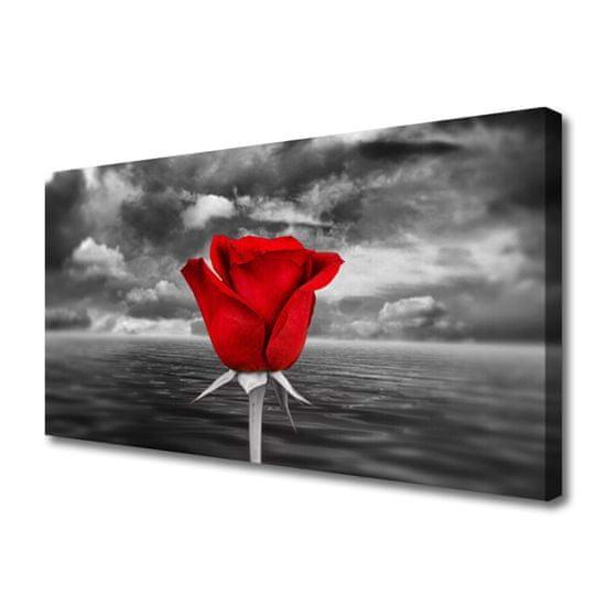 tulup.si Slika na platnu Rose flower rastlin morje