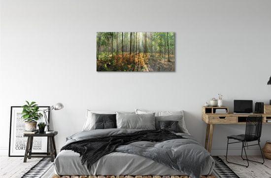 tulup.cz Sklenený obraz les breza 120x60cm